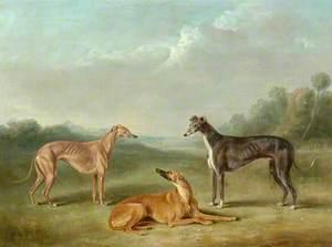 Three Greyhounds