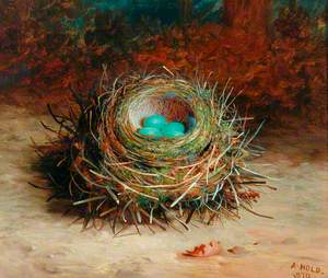 Hedge Sparrow's Nest