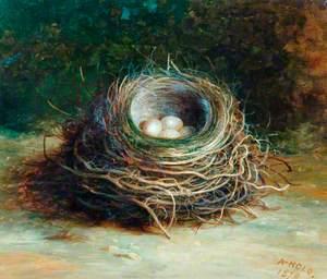 Starling's Nest