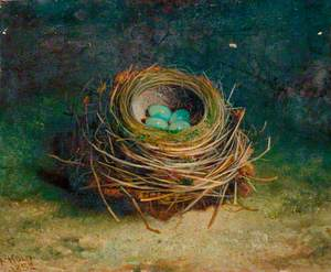 Nest of a Song Thrush