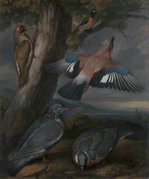Jay, Green Woodpecker, Pigeons, and Redstart