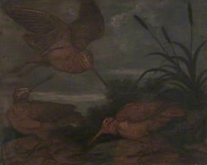 Woodcock at Dusk