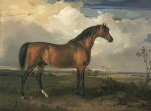Eagle, a Celebrated Stallion