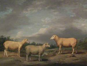 Ryelands Sheep, the King's Ram, the King's Ewe and Lord Somerville's Wether