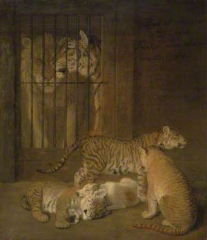 Group of Whelps Bred between a Lion and a Tigress