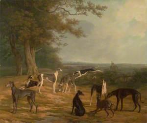 Nine Greyhounds in a Landscape