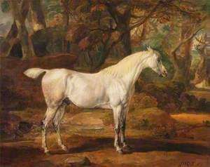 Grey Arabian Stallion, the Property of Sir Watkin Williams-Wynn