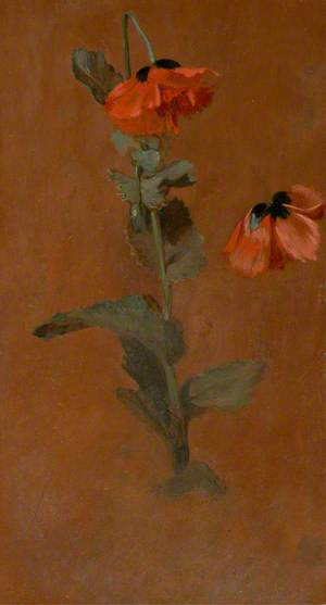Study of Poppies