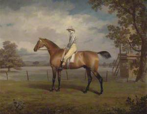 A Racehorse, Possibly Disguise, the Property of the Duke of Hamilton, with Jockey Up