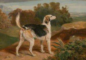 Ravager, One of the Lambton Hounds