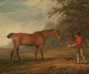 A Bay Horse Approached by a Stable Lad with Food and a Halter