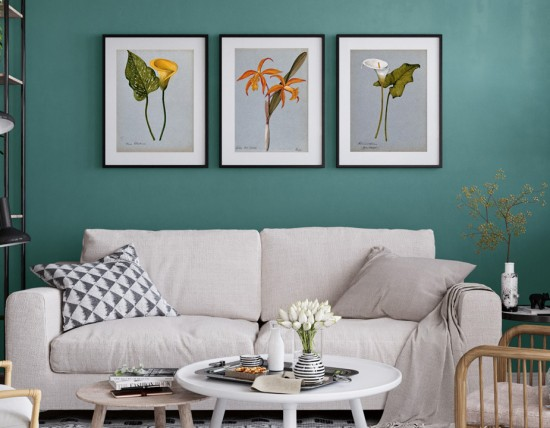 Framed prints of botanical artworks from the Wellcome Collection