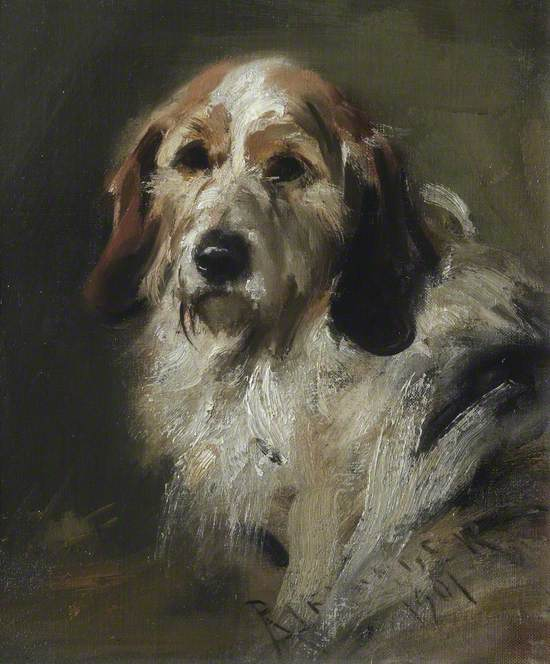 A Basset Hound