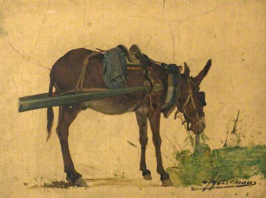 Study of a Mule (or Study of a Donkey)