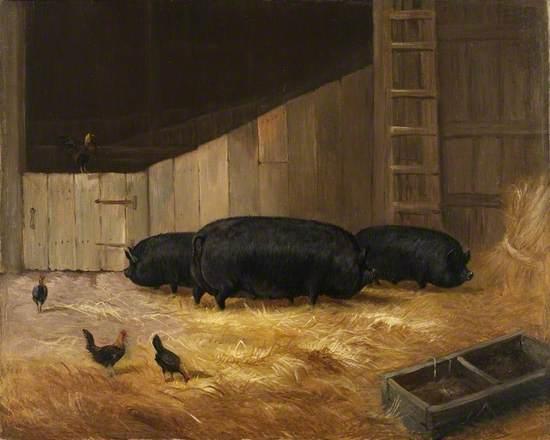 Prize Pigs