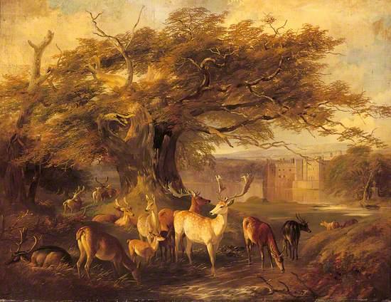 Fallow Deer Watering