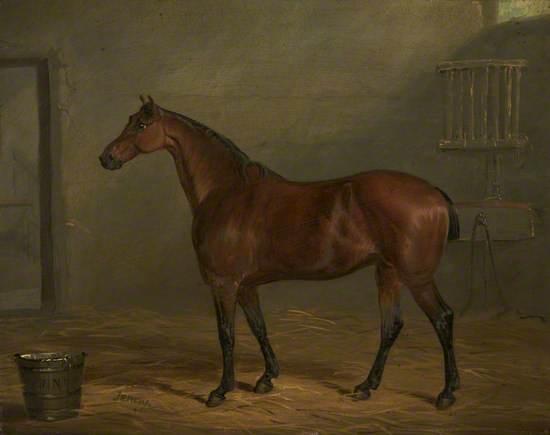 Mr Nuttall's Pony, 'Jenny'