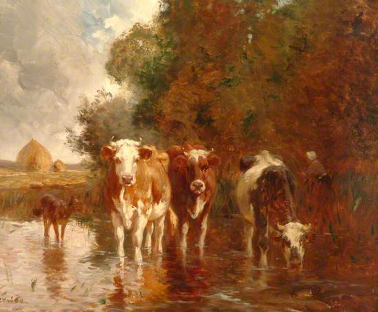 Cows in a Pool