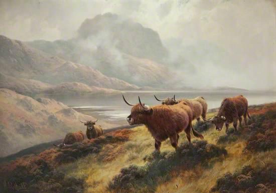 Highland Cattle above Loch Maree