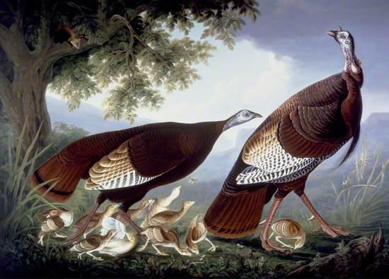 Family of Turkeys