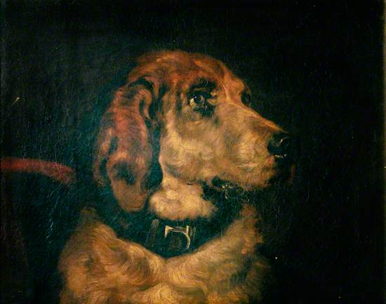 Head of a Bloodhound