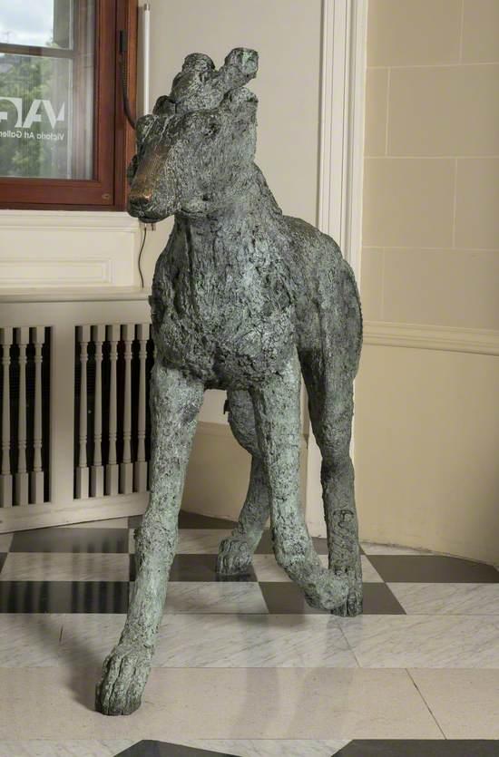 Lady-Hare on Dog