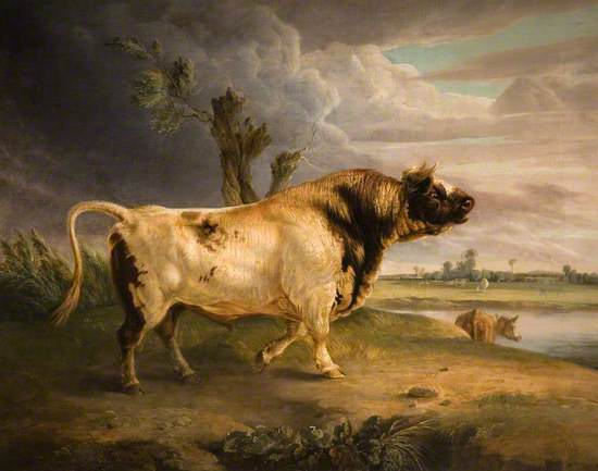A Prize Bull