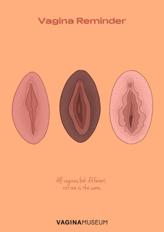 illustration by Charlotte Willcox commissioned by the Vagina Museum