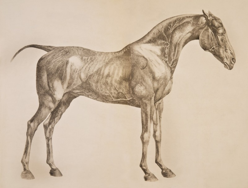 A National Gallery Of Sporting Art Opened In Newmarket The Home Of