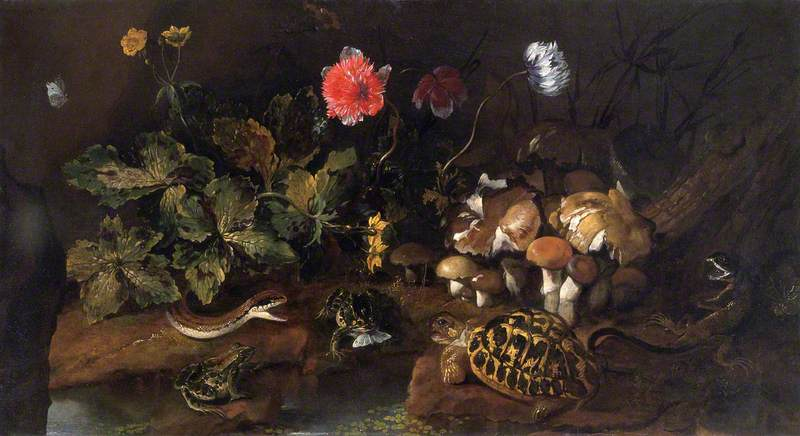 Still Life with a Snake, Frogs and a Tortoise