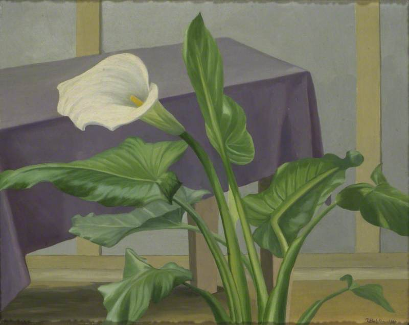 Interior with an Arum Lily