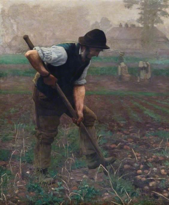 A Man Digging Potatoes