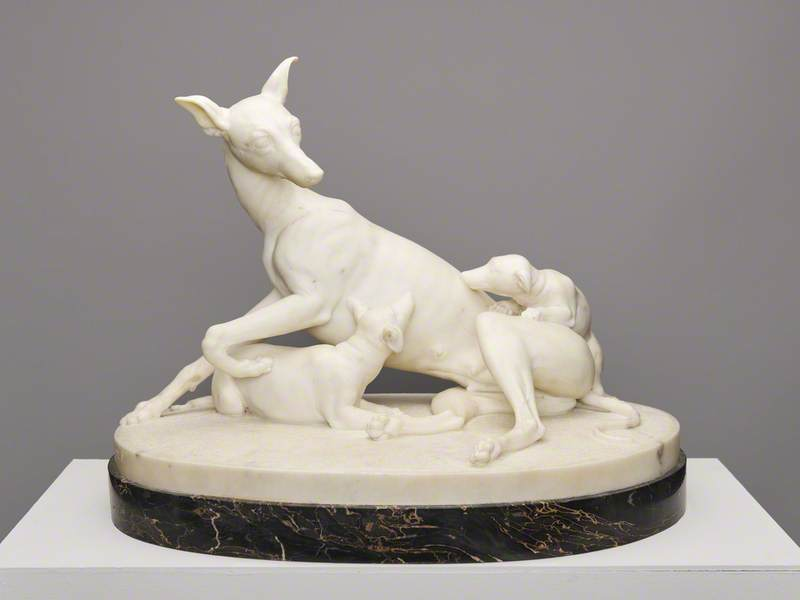 Greyhound with Puppies