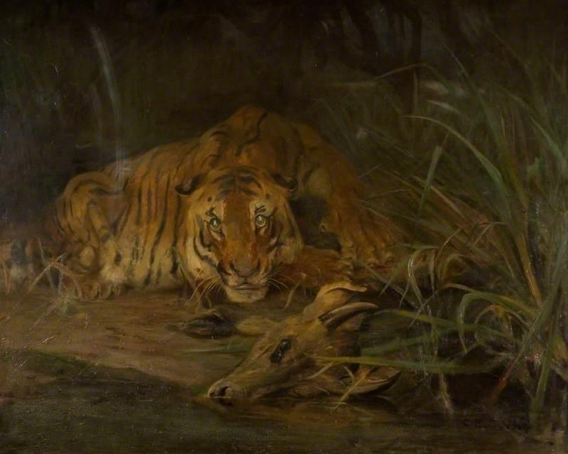 Tiger and Prey
