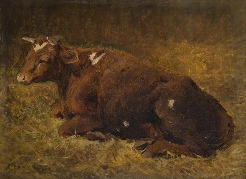 A Cow Lying on the Ground