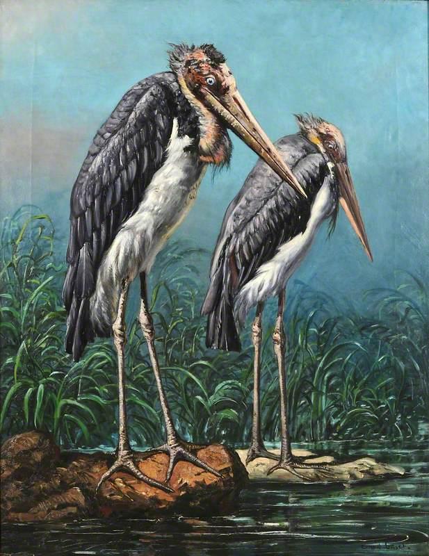 Two Adjutant Storks