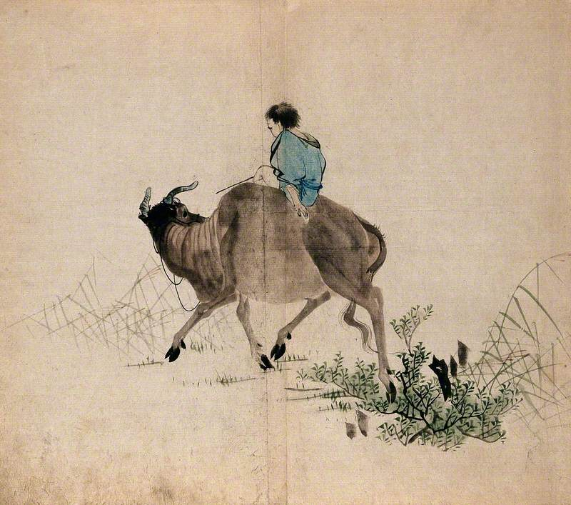 A Man Riding an Oxen through Grass and Shrub Land