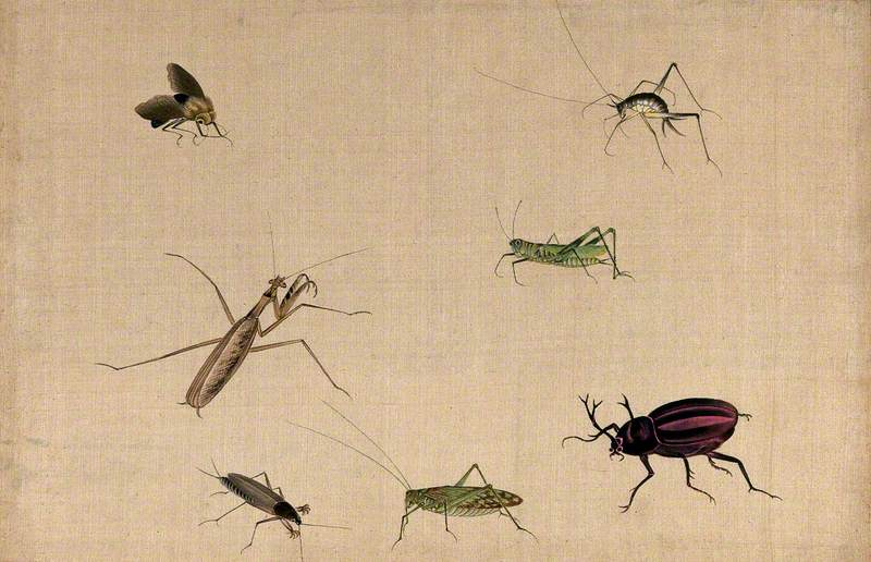 Seven Insects, including a Grasshopper, Praying Mantid and Stag Beetle