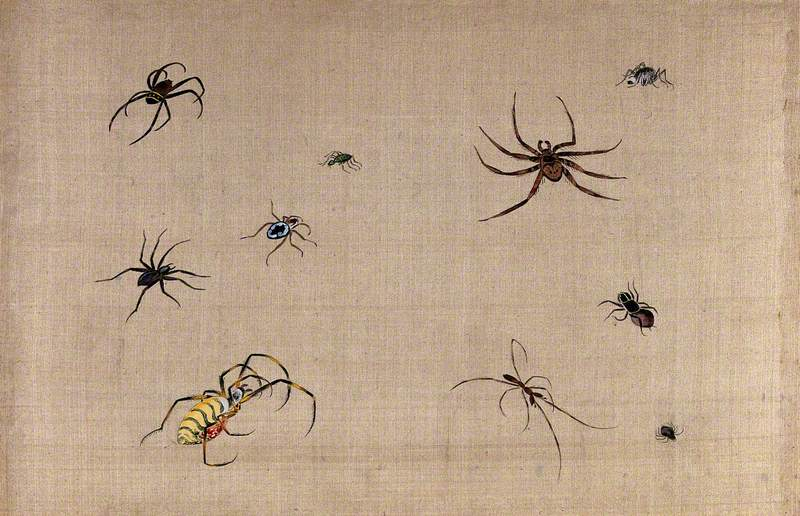 Ten Spiders, Showing Much Variation in Shape and Colour