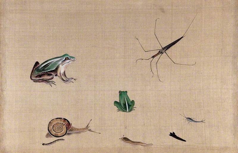 Seven Animals from Japan, including Two Frogs, a Snail, a Slug, a Water Bug and a Silver Fish