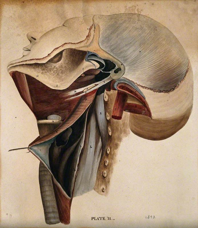 Dissection of the Neck