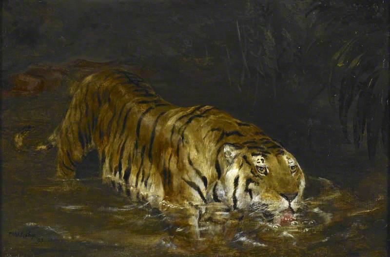 Tiger Drinking at a Jungle Pool