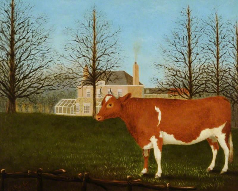 Guernsey Heifer behind Manoir de Pierre Percee