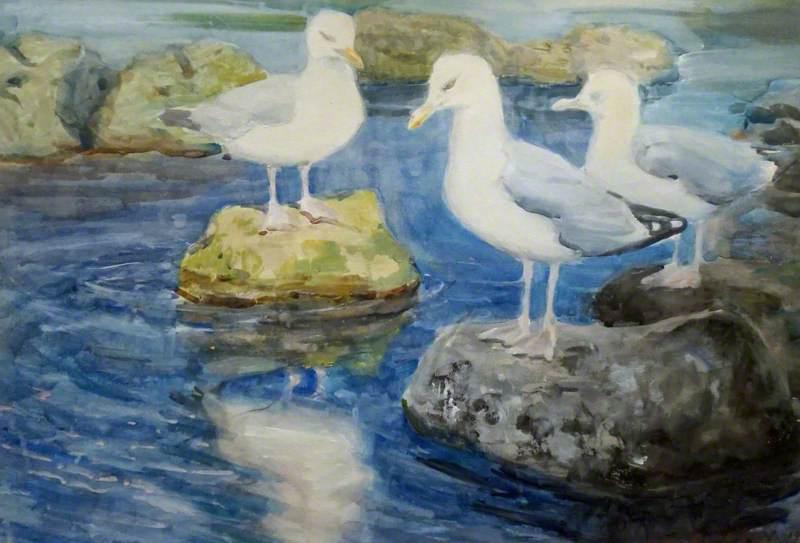Gulls Sitting on Rocks
