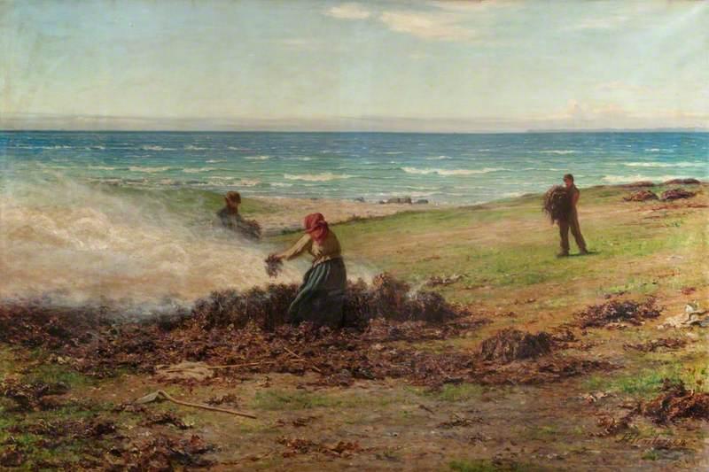 Kelp Burning
