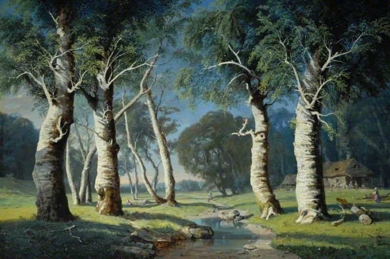 Study of Birch Trees