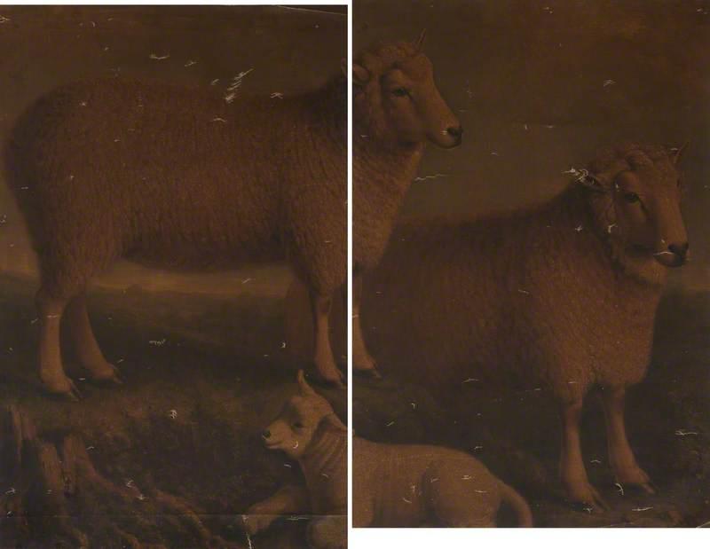 Ryeland Ram, Ewe and Lamb