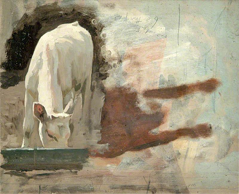 Calf Drinking from a Trough