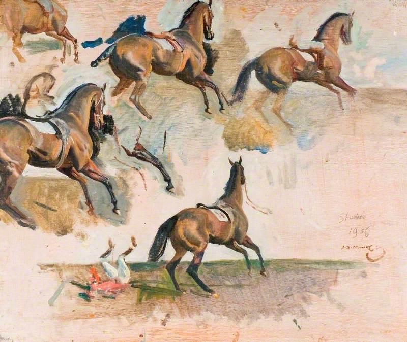 Horse Studies