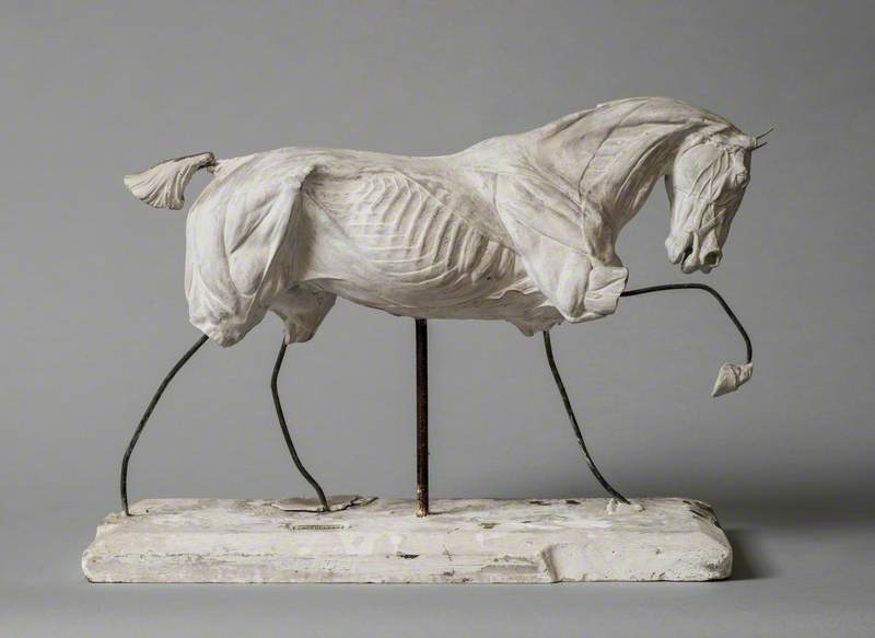Anatomical Model of a Horse